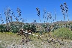 Cabo_de_Gata_04