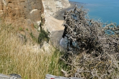 cape_kidnappers_18
