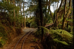 driving_creek_railway_1