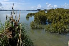 mangroven_arapaoa_river_2