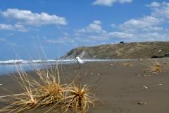 porangahau_beach_01