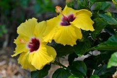 royel_botanic_garden_06