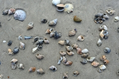 waihi_beach_2