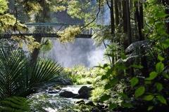 whangarei_falls_4