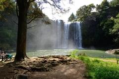 whangarei_falls_7